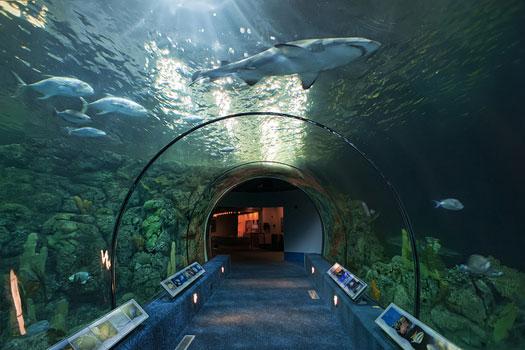 Moody Gardens Aquarium Pyramid