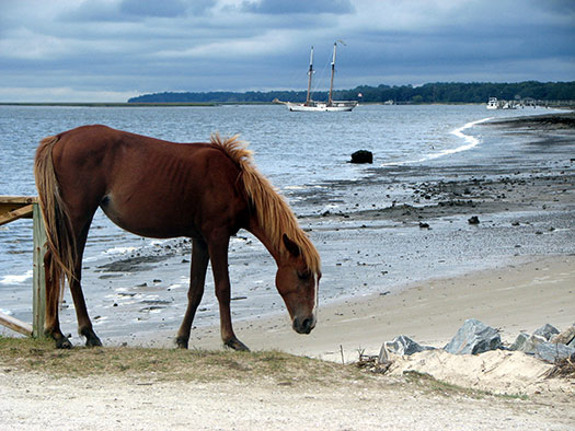 Cumberland Island, Georgia (Image: dougandme)