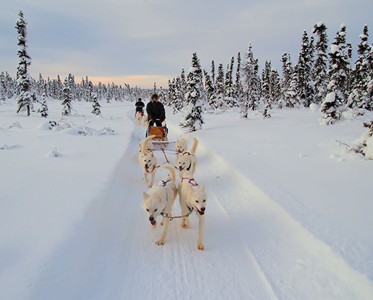 Dog sled in Alaska, United States (Image: EclecticBlogs)