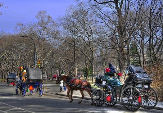 Horse drawn carriage (Image: mellow maverick)