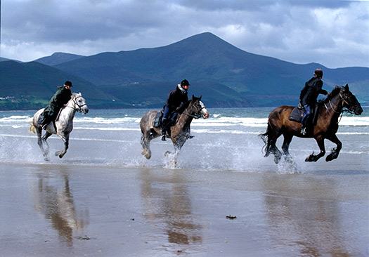 Horse in Keel Beach, Ireland (Image: Fáilte Ireland)