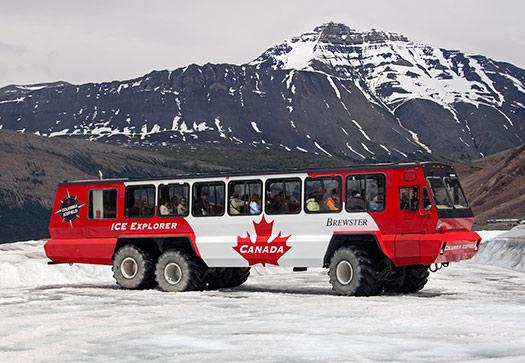 Terra Bus (Image: MarilynJane)