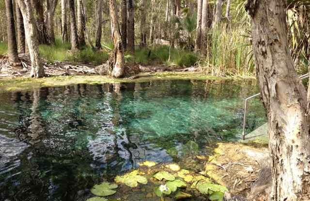 Mataranka hot springs (Image: Taryn Adler)