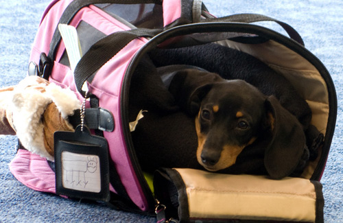 This puppy travels in style. (Image: tombothetominator)