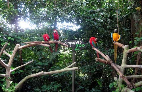 Singapore Zoo (Image: Ariaski