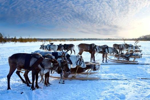 © Vladimir Melnikov, 2013. Used under license from shutterstock.com