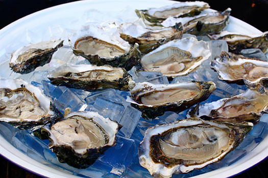Oysters | Jersey, United Kingdom