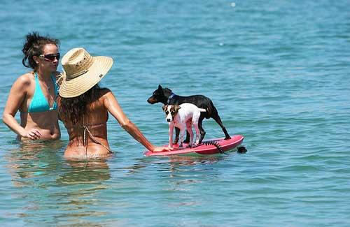 Boogie-boarding dogs in San Diego (Image: kellinahandbasket)