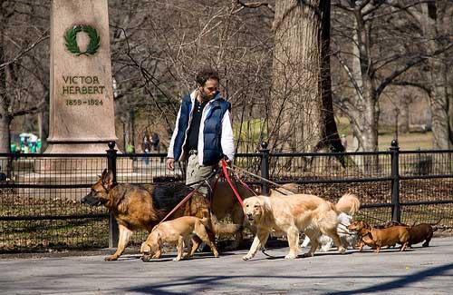 Dog walker (Image: dirk.olbertz)