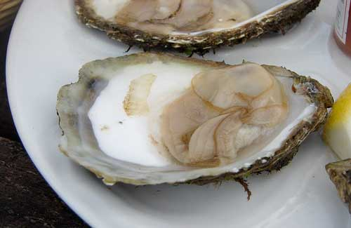 Oysters  (Image: Mark Waters)