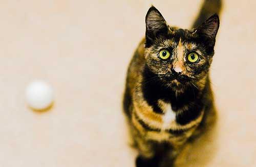 Cat (Image: Stefan Tell)