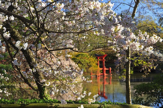 The Shinto Shrine at Brookyn Botanic Garden © Todd Boland, 2013. Used under licence from Shutterstock.com
