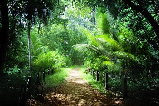 Jungle of Seychelles Island © Iakov Kalinin, 2013. Used under licence from Shutterstock.com