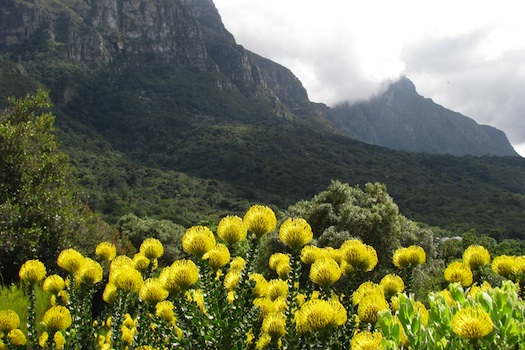 Table Mountain in Kirstenbosch © Todd Boland, 2013. Used under licence from Shutterstock.com