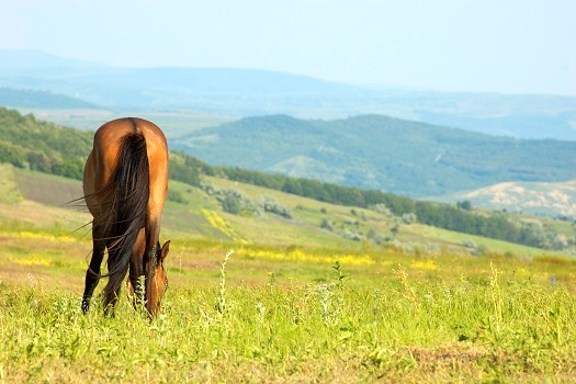 Backside © Serghei Starus/flickr (http://www.thinkstockphotos.co.uk/image/stock-photo-lonely-horse-grazing/92281114)