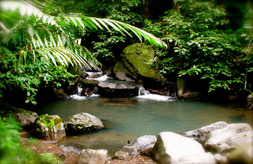 El Yunque National Rainforest (Image: jeffgunn)