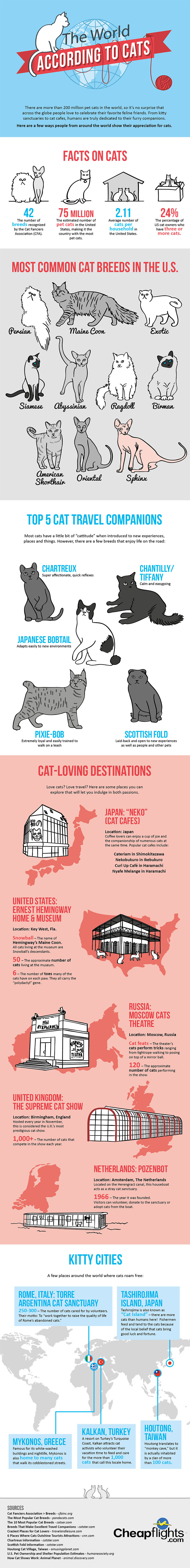 The world according to cats 1