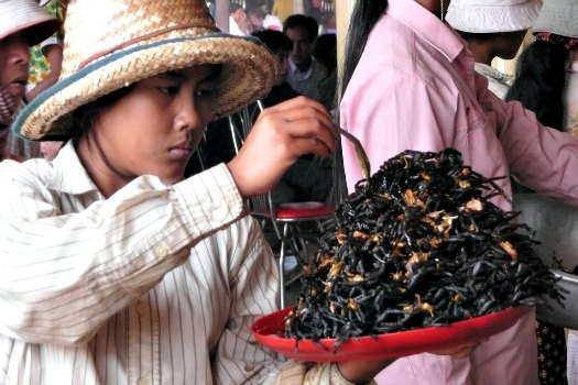 In Skuon, Cambodia, fried tarantulas are a local favourite that has turned into a tourist rite-of-passage