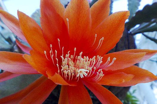 Barbican Conservatory © ronankav/flickr (https://www.flickr.com/photos/ronankav/506238878)