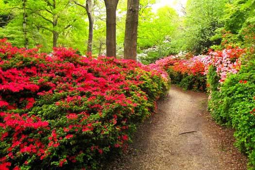 Isabella Plantation © London looks/flickr (https://www.flickr.com/photos/londonlooks/4610354121)