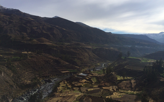 Terraced agricultural land in the Colca Valley (Image: Pearse Lombard)