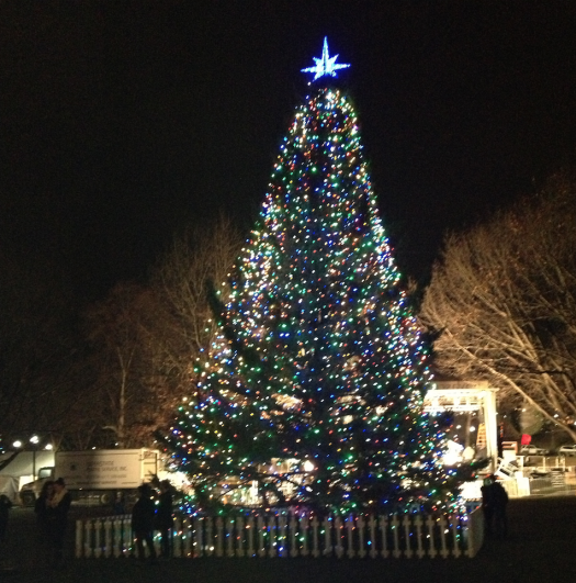 Christmas Tree Roots: 10 Iconic Holiday Trees & Their Origins 1