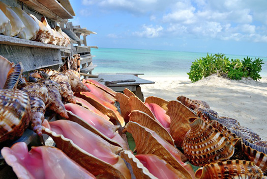 conch shells for sale on a beach