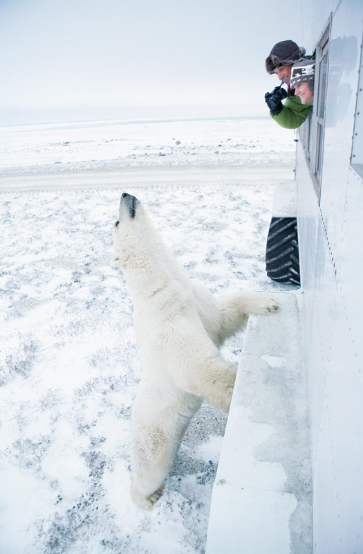 Polar Bear encounter in Churchill, Manitoba. Photo by Canadian Tourism Commission