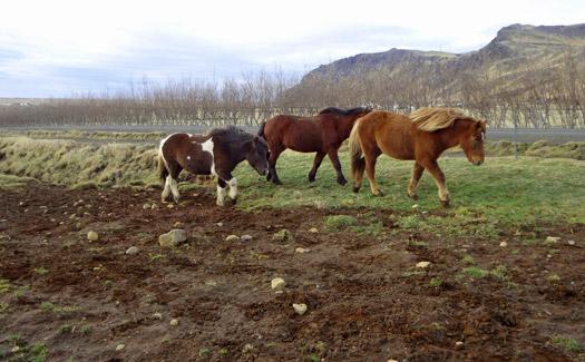 15 horses