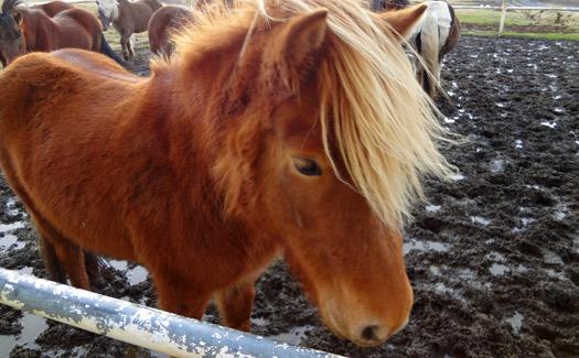 16 horses-2