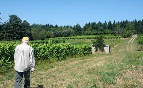 Bainbridge Winery