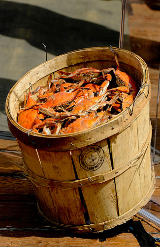 A bucket of Chesapeake Bay crabs (Image: MDGovpics)