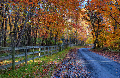 A country road near Bel Air, Maryland (Image: Randy Pertiet)