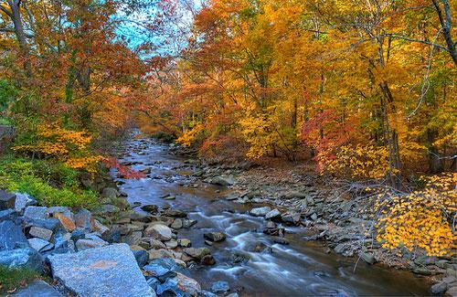 A creek rolls through Maryland (Image: Randy Pertiet)