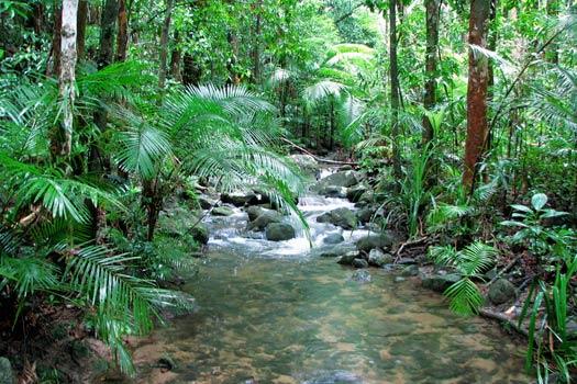 Mossman River, Daintree Rainforest. Photo by tanetahi