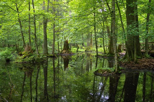 Białowieża National Park, Poland. Photo by Frank.Vassen