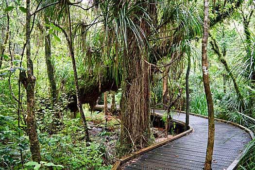 Waipoua Forest. Photo by daspunkt