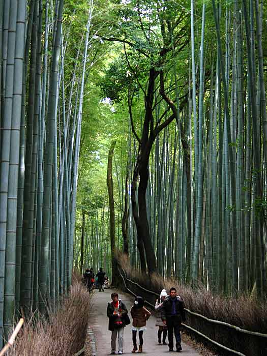 Visitors in Sagano Bamboo Forest. Photo by Antti T. Nissinen