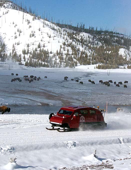 Snow bus (Image: Yellowstone Alpine Guides)