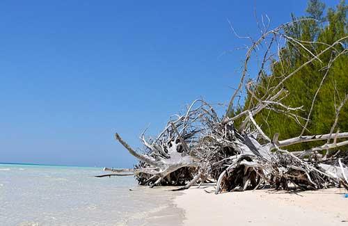 Lucayan National Park, Bahamas (Image: katiebordner)