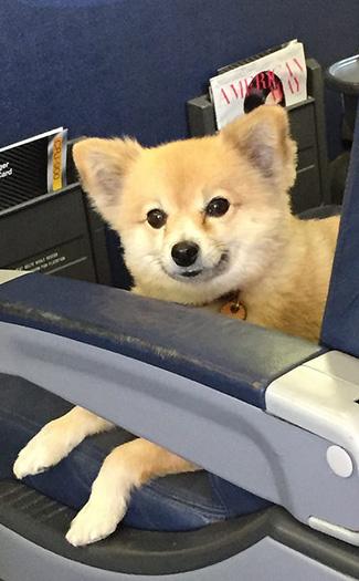 pet on plane