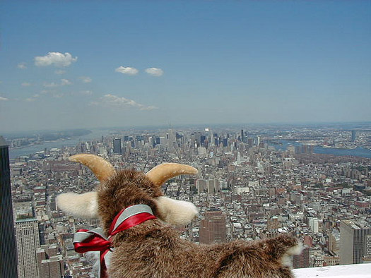 A goat looking out across Gotham AKA New York City. Photo: Neil Rickards