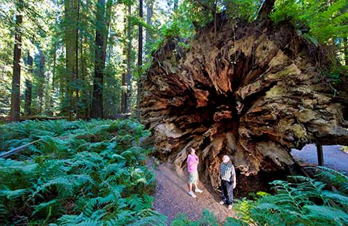 Humboldt Redwoods State Park (Image: California Travel and Tourism Commission/ Andreas Hub)