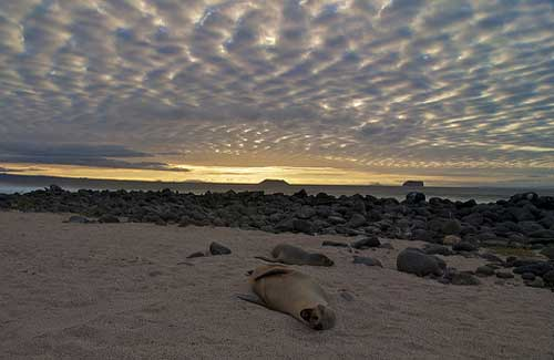 Sea lions on the beach at sunset in the Galapagos (Image: Andrew Turner)