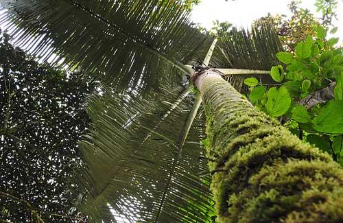 Bellavista Cloud Forest Preserve (Image: reinketelaars used under a Creative Commons Attribution-ShareAlike license)