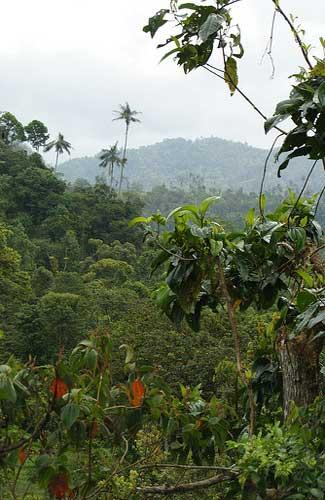 Bellavista Cloud Forest Preserve (Image: Dallas Krentzel)