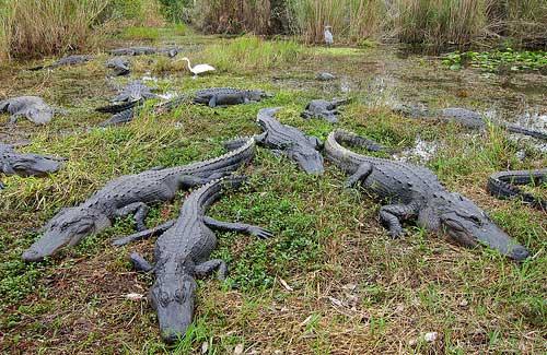 Everglades National Park (Image: MiguelVieira)
