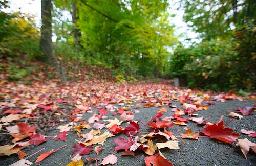 Connecticut's fall foliage (Image: eschipul used under a Creative Commons Attribution-ShareAlike license)