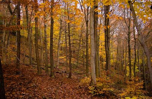 Connecticut's fall foliage (Image: citizenswaine)