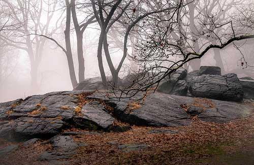 Central Park in New York City (Image: Eric K Gross)